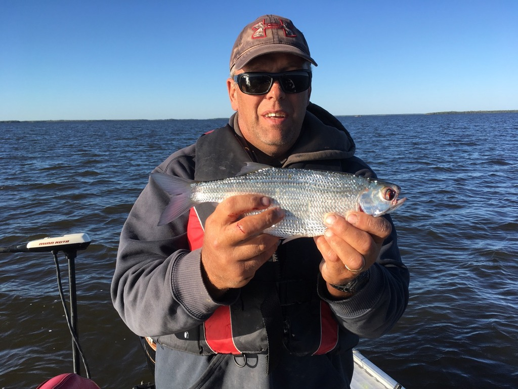 Master Angler Catches For Robert Wichers Manitoba